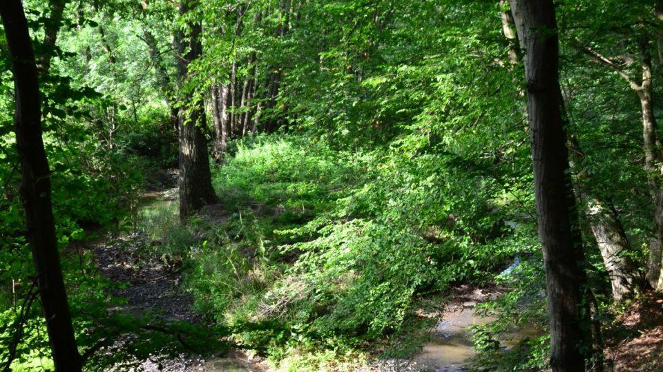 Na cestu do údolí Rokytné se nejlépe vydejte z Jaroměřic nad Rokytnou do obce Příštpo, kde se vchází do údolí po žluté turistické značce