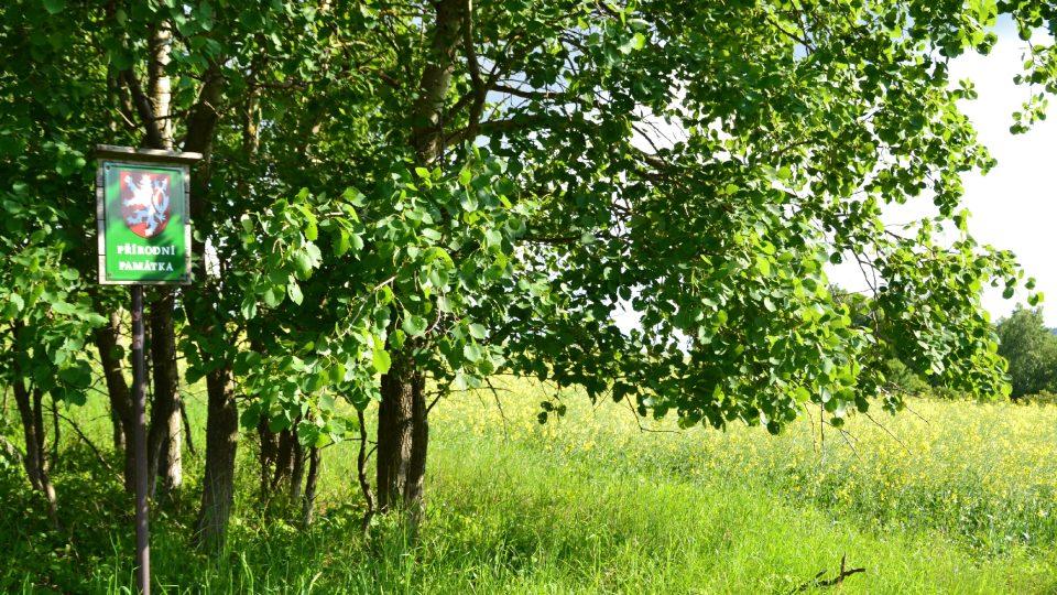 Přírodní památka Kocoury