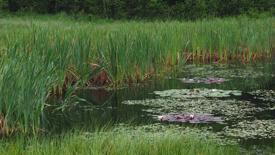 Mokřady u obce Sklené