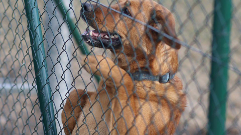 Pes Ben, útulek Třebíč