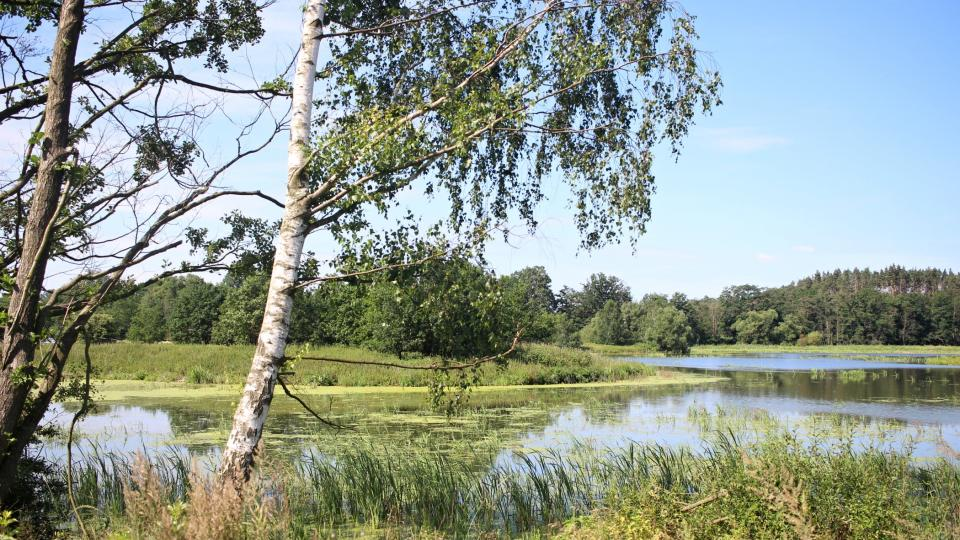 Rybník, Černíč