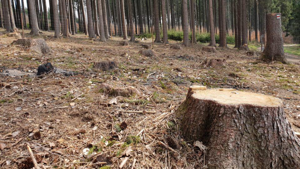 Turistické značky v pokáceném lese, Vysočina