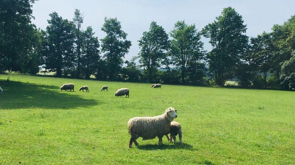 Pastva, Žďársko