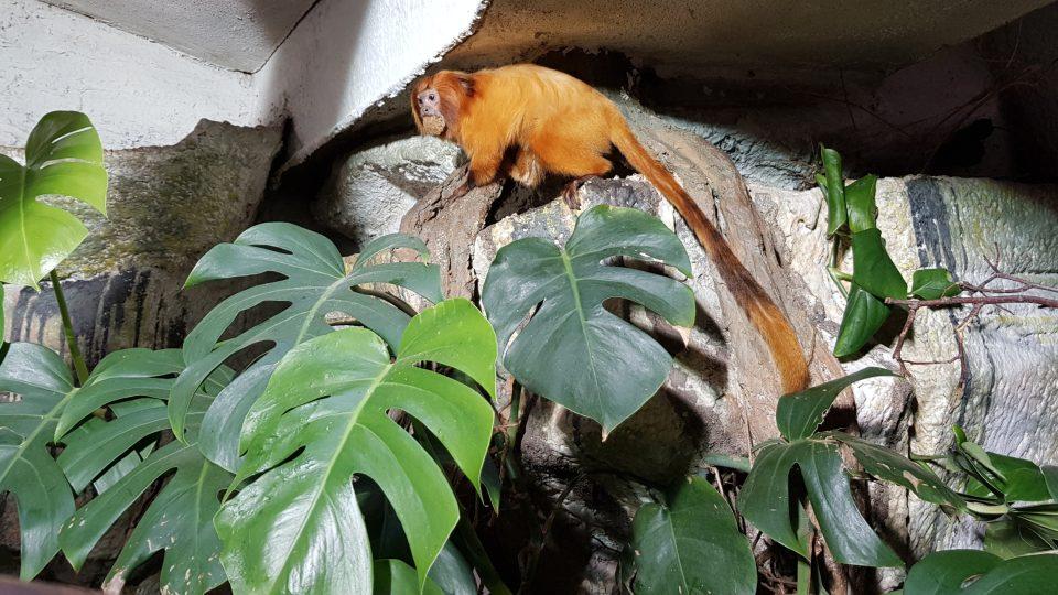 Krmení opic v jihlavské ZOO