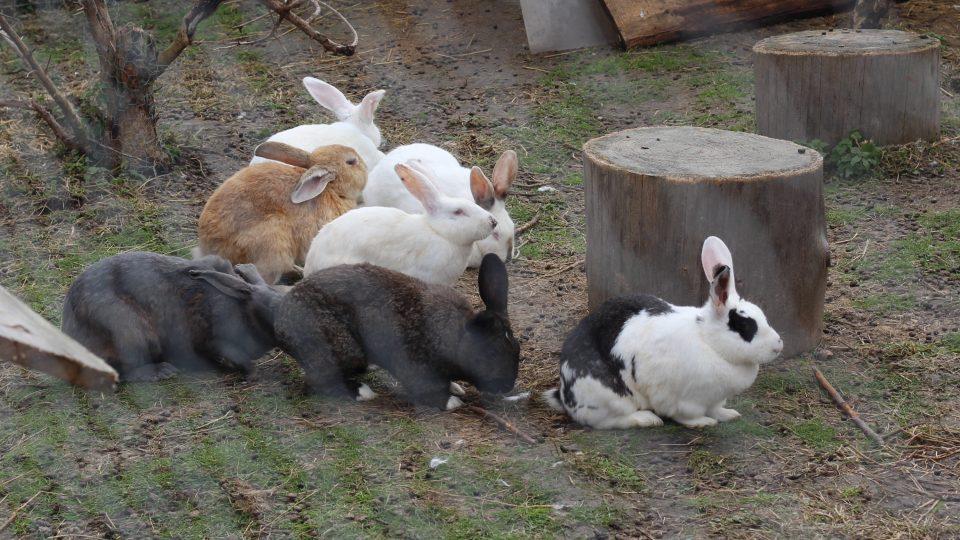 Chov králíků, Ratibořice