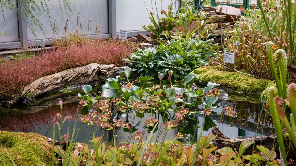 Masožravé rostliny v pavilonu D