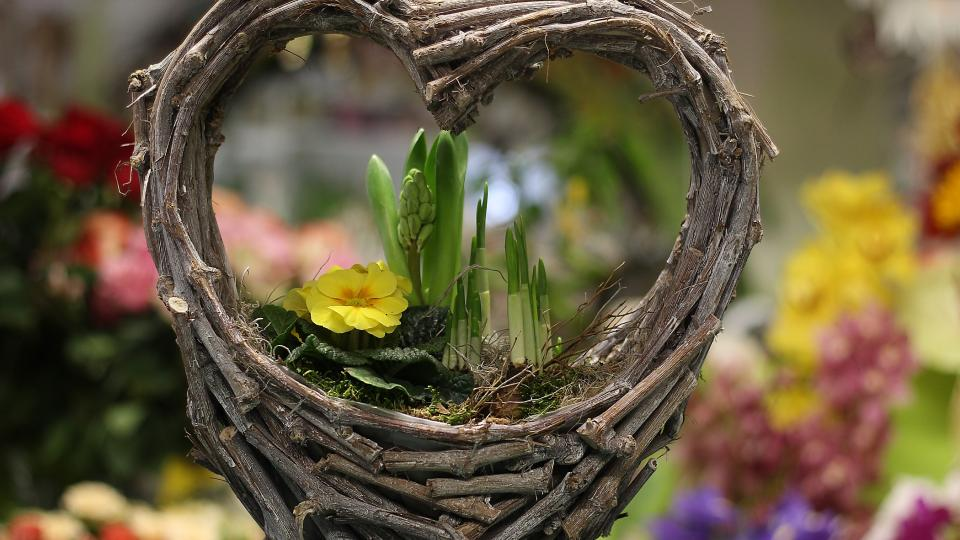 Květiny, dekorace