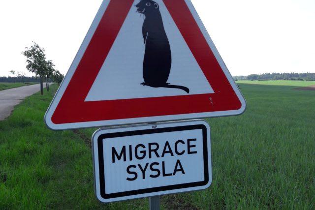 Speciální dopravní značky upozorňující na migraci syslů.