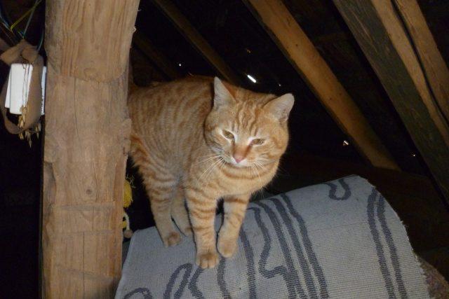 Kočka na trámu, ilustrační foto