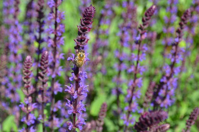 Přírodní zahrada Marty Veselé Jirousové