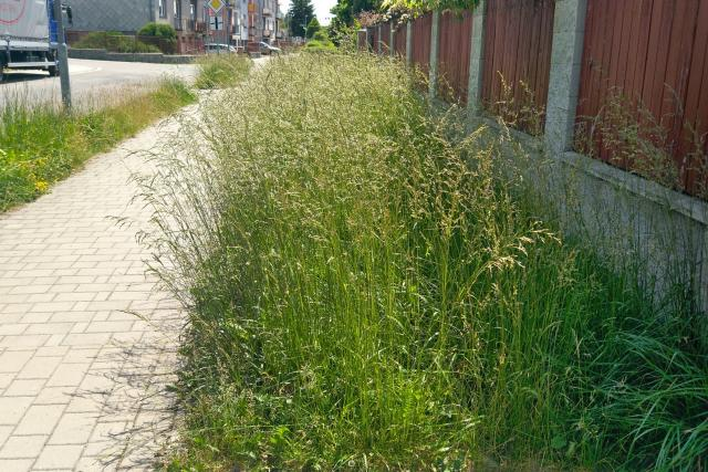 Neposekaná tráva, Žďár nad Sázavou