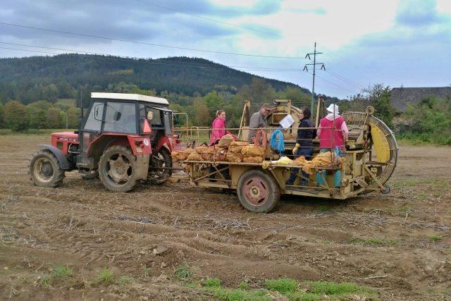 Na polích Vesy rostou brambory průmyslové, konzumní, sadbové i určené ke šlechtění