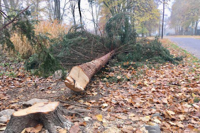 Kácení stromů v parku TGM v Lounech začalo