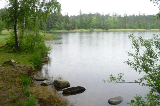Velký Pařezitý rybník, Řásná
