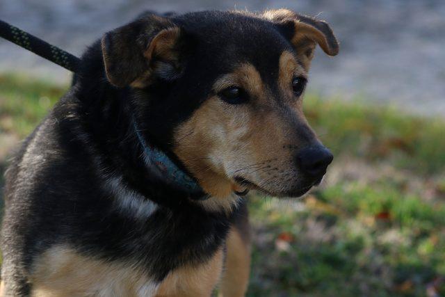 Pes,  ilustrační foto   foto: Milan Kopecký,  Český rozhlas