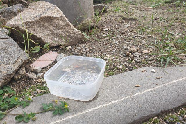 Jaroměřice n. R., ulice Klášterní, krmení koček