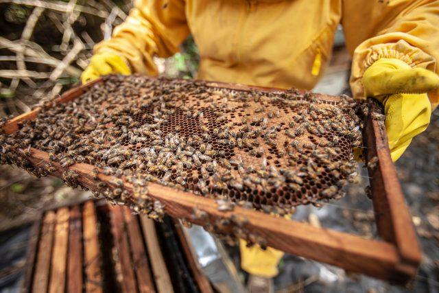 Včelař a včely