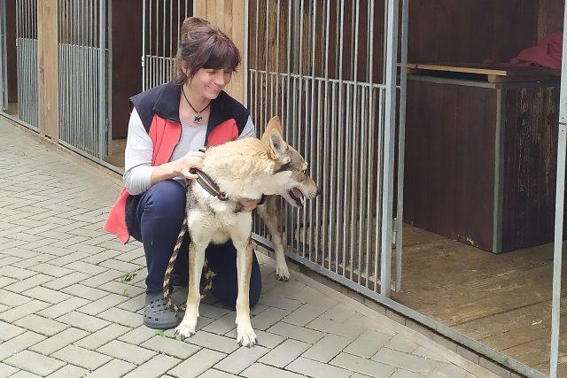 Jana Voháňková, majitelka psího hotelu