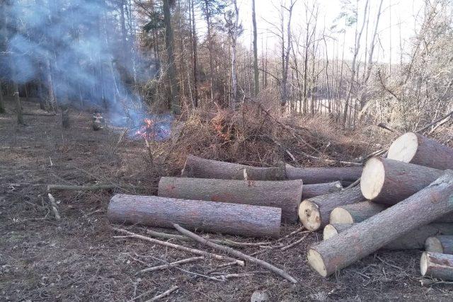 Kůrovec řádí v jihočeských lesích stále víc. Zdeněk Šmíd, který vlastní celkem osm hektarů, má až třetinu napadenou tímto škůdcem