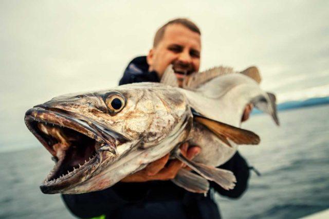 """Dokument """"Za rybami světových moří"""", ilustrační foto"""