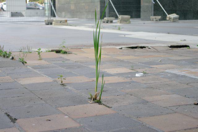 Terasa je zarostlá plevelem, místy se povalují odpadky.